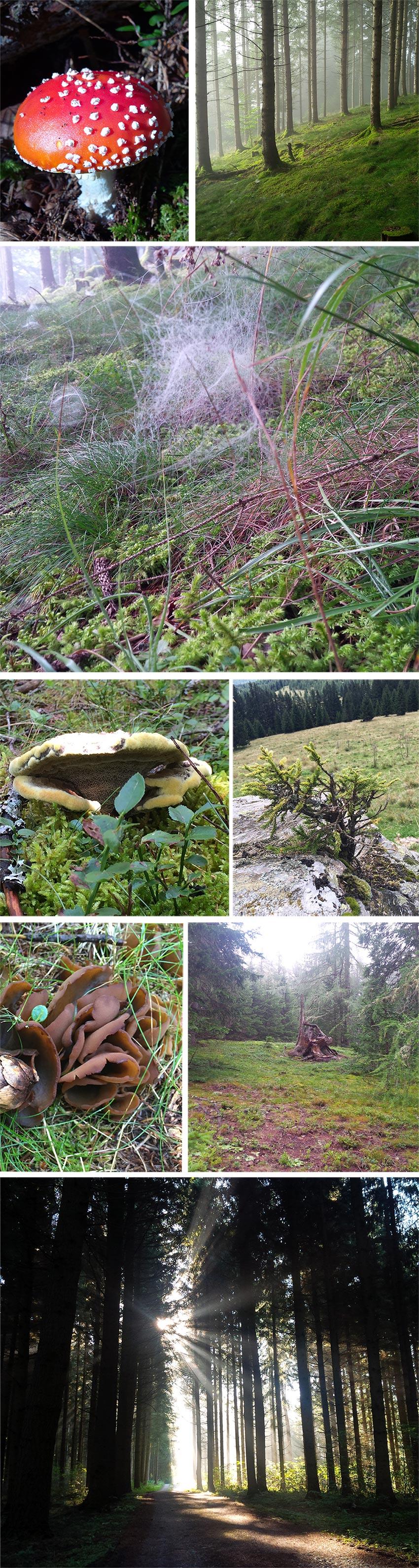 Magischer-Wald59ada65adcbfe